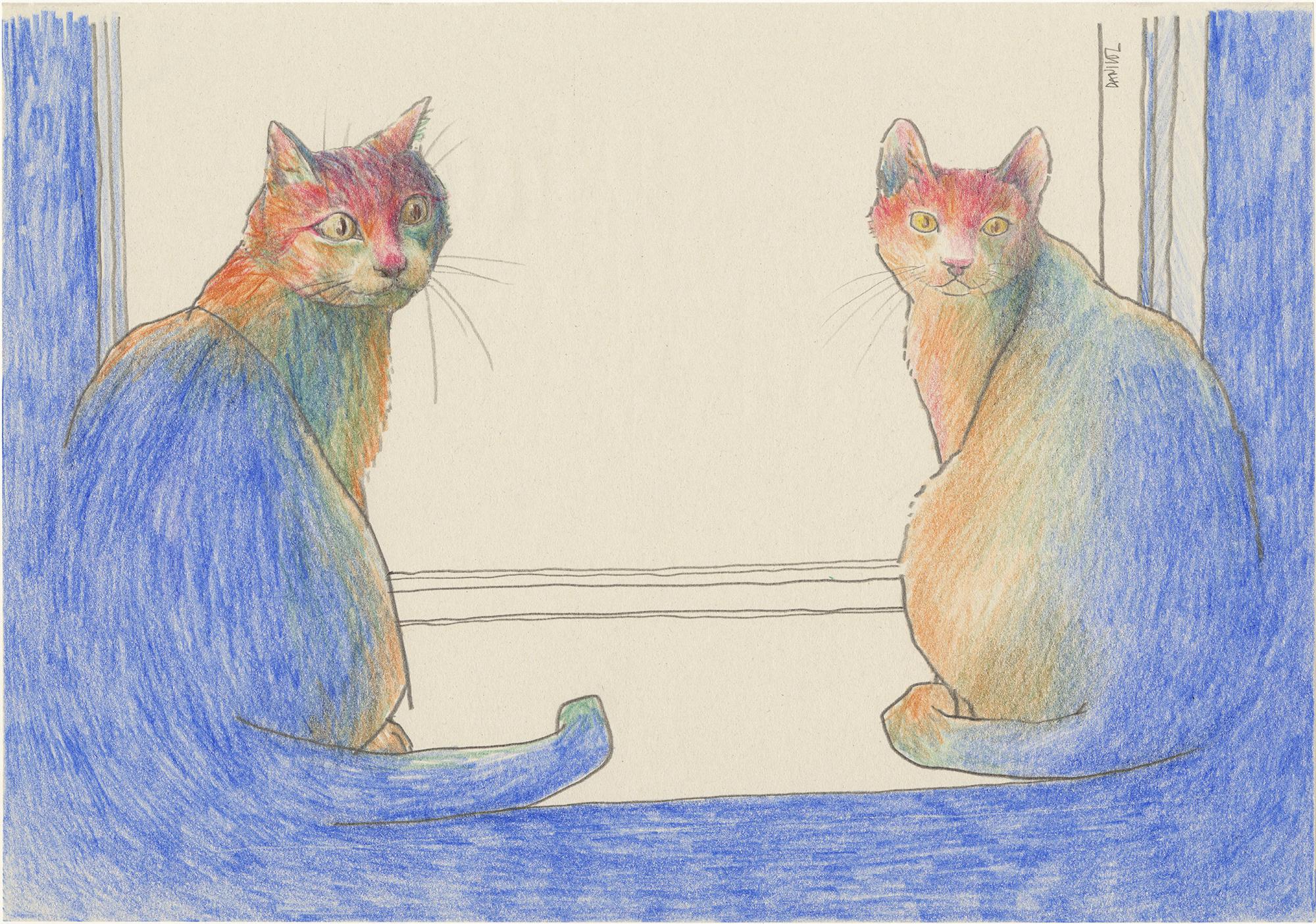 2-Gatos-daniloz