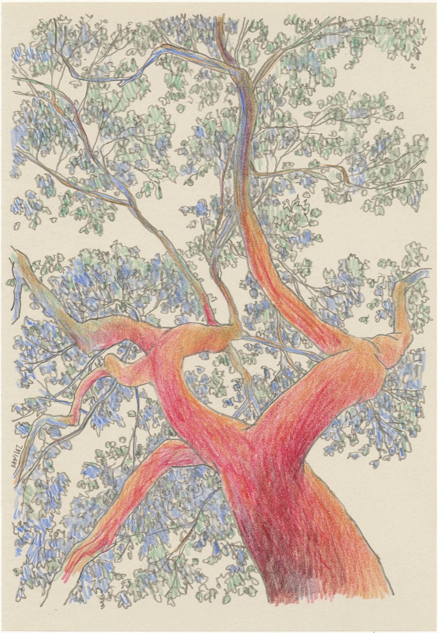 Árvore-Vermelha-daniloz