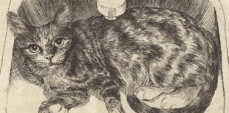 O Gato na Pia – Gravura